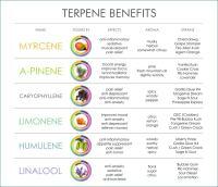 cannabis-terpene-benefits